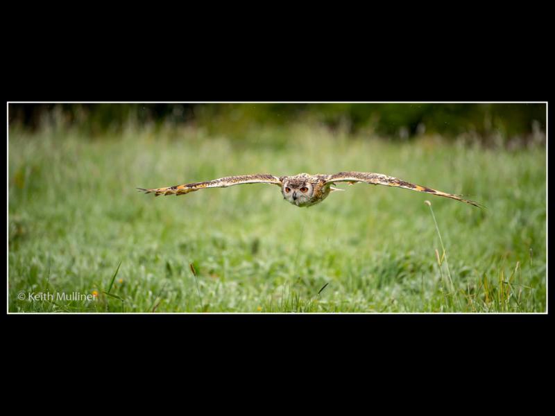 Keith Mulliner – 3_Indian Eagle Owl._N_15–2