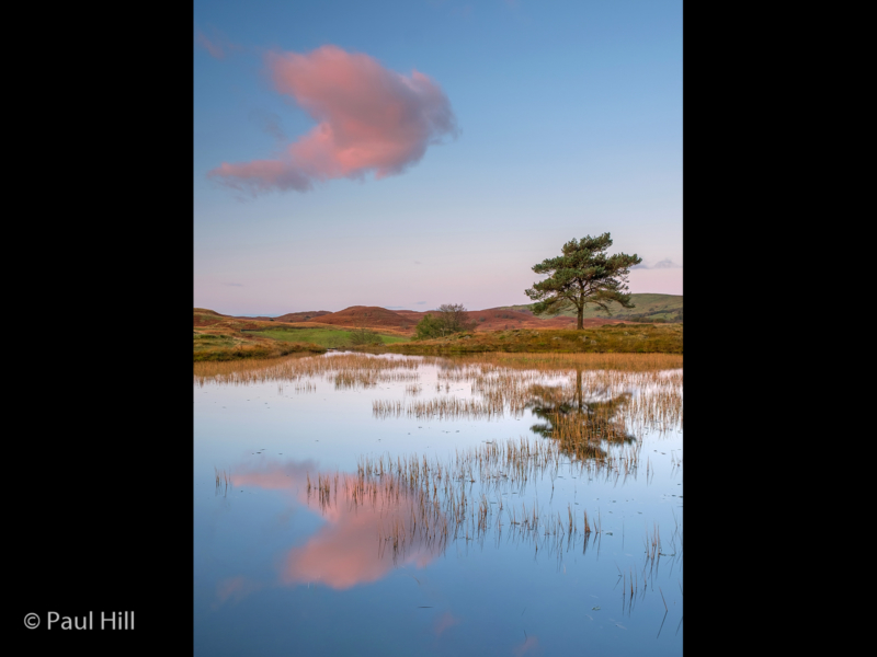 Paul Hill_The Cloud and the Tree_G (20)-2